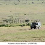 https://www.shutterstock.com/search/safari+car?searchterm=safari%20car&page=2
