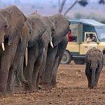 http://safari-consultants.com/destinations/kenya/regions/amboseli-national-park