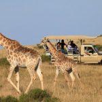 http://www.mytwendesafari.com/kenya-travel-experience/