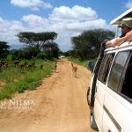 http://www.sikunjema.com/index.php/affordable-luxury-safaris-in-kenya/affordable-3-days-safari-holidays-in-kenya/affordable-3-days-kenya-safari-holiday-to-tsavo.html