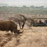https://www.extraordinaryjourneys.com/destinations/kenya/laikipia/lewa-safari-camp/