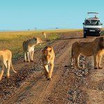 http://www.kenyatoursandsafaris.com/index.php/kenya-safaris?layout=edit&id=85