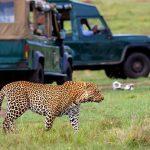 http://www.africapoint.com/national-parks/kenya/maasai-mara-national-reserve.html