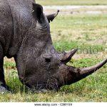 http://www.alamy.com/stock-photo/game-drive-kenya.html