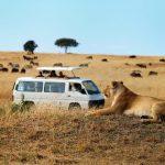 http://www.mytwendesafari.com/family-safari-masai-mara-coast-beach-holiday-kenya-2/