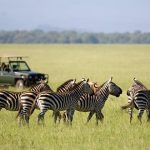 http://www.safari.co.za/Popular_Selections-travel/masai-mara-vacation-packages-kenya.html