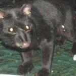 Genet cat belongs to the genus Genetta