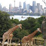 Giraffe is the tallest land animal