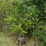 Kenya has built a reputation as East Africa's number one safari destination