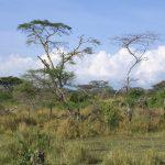 Circumcision is called Emuratta in Masai language