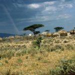 Masai's distinctiveness has made them one of Kenya's most internationally famous tourist attractions