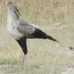 In Kenya the migratory birds can be spotted from September to April