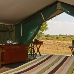 Tented camps are famous for its big cat sightings