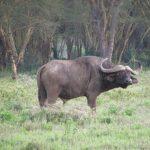 Kenyan wildlife