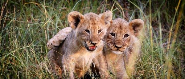 mabula safari lodge, child friendly safari accommodation
