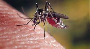 safari photo prévention passive contre Paludisme ( Malaria )