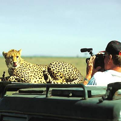 guide photo safari photo Le Guépard tire la langue au cameraman