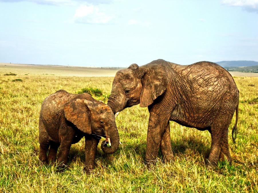 Elephant cubs