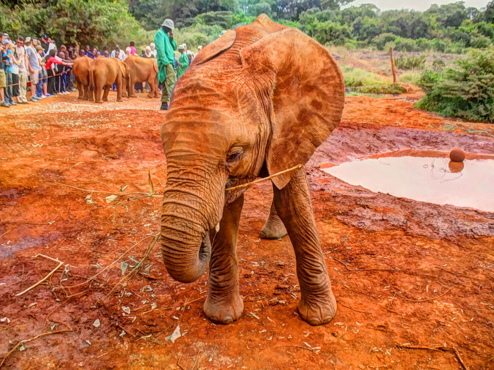 David_Sheldrick_close_up