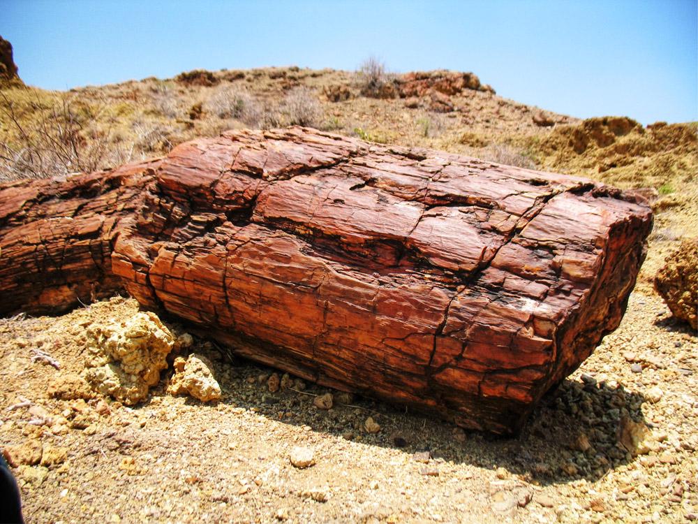 Sibiloi National Park_Petrified Forest log