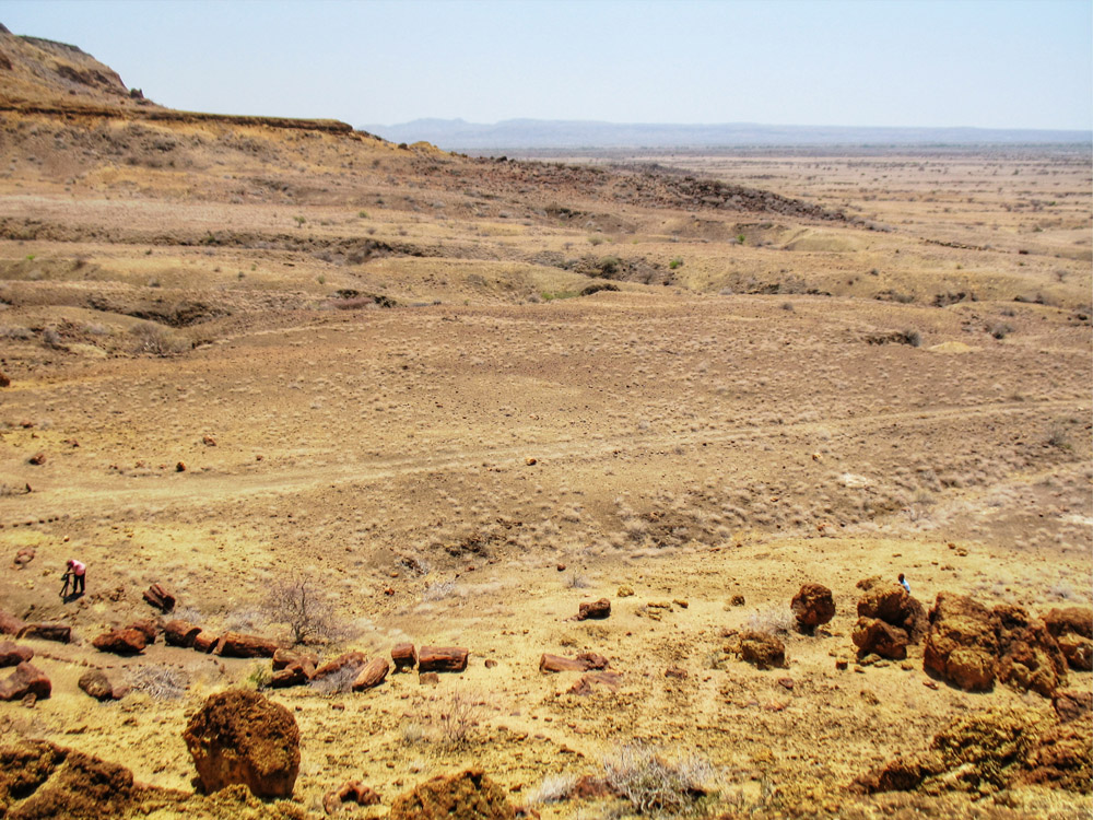 Sibiloi National Park_Petrified Forest view
