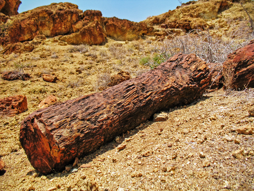 Sibiloi National Park_Petrified Forest_well preserved log