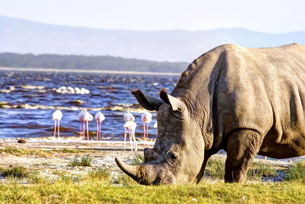Lake Nakuru National Park_rhino2
