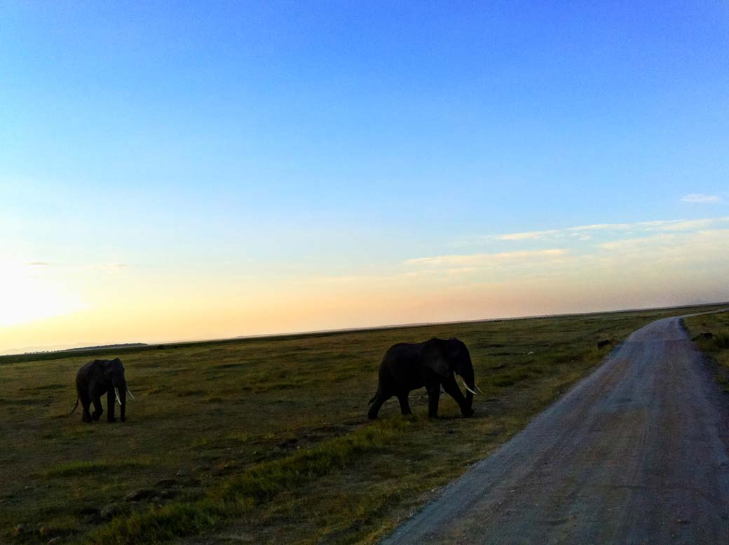 Amboseli National Park_Elephant crossing road
