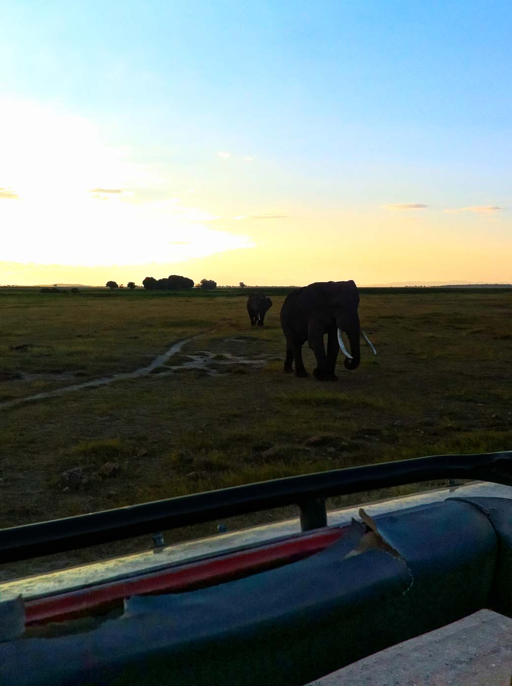 Amboseli National Park_Elephant walking towards us