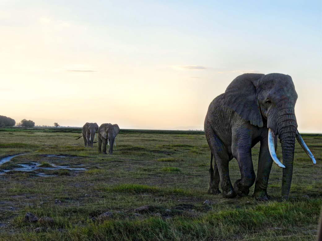 Amboseli National Park_Follow the Leader