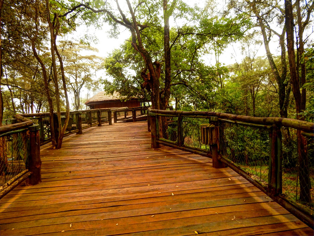 Nairobi Safari Walk_boardwalk