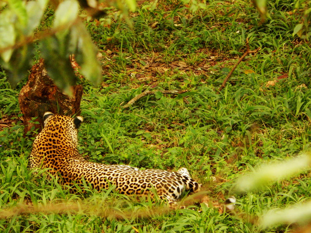 Nairobi Safari Walk_leopard3