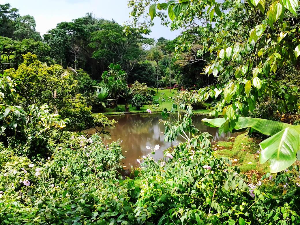 Kapsimotwa gardens_dam4