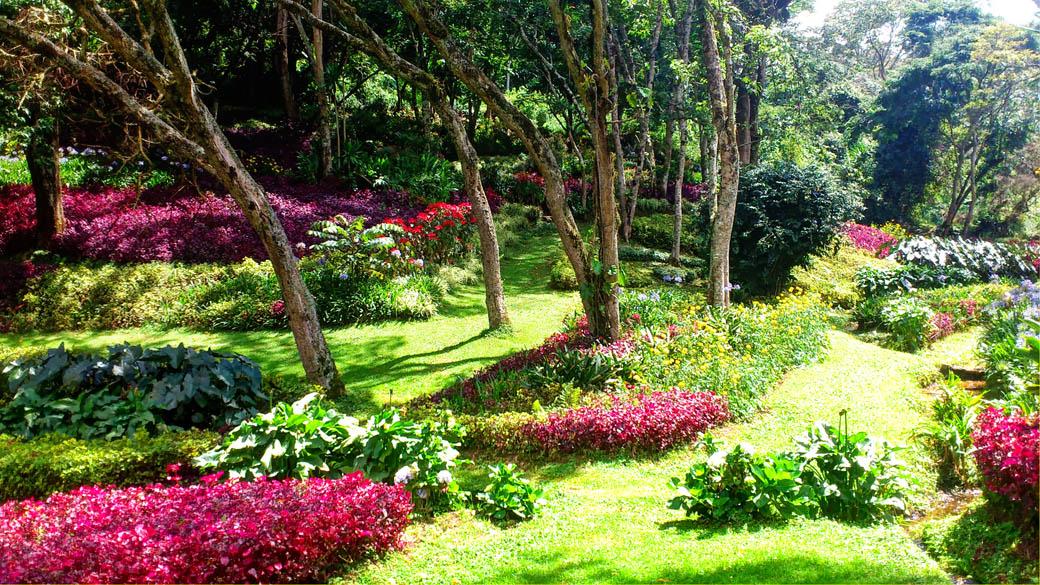 Kapsimotwa gardens_flowers