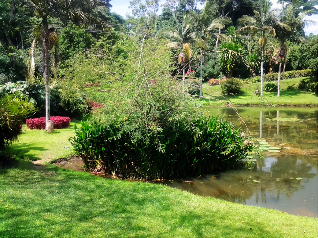 Kapsimotwa gardens_grounds5