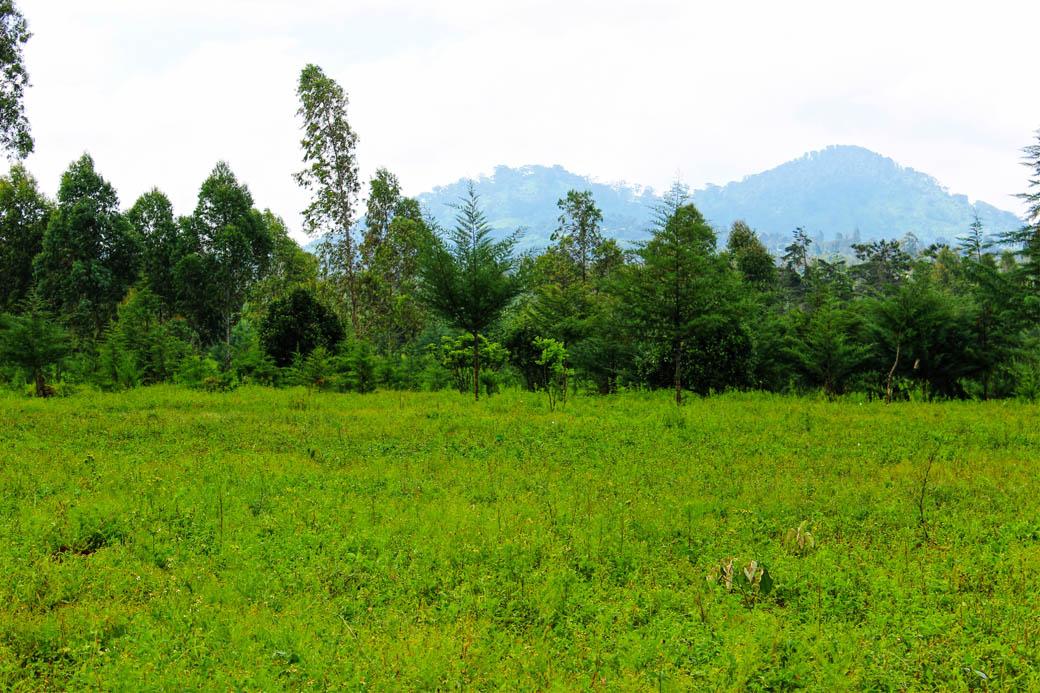 Save Mount Kenya _clearing4