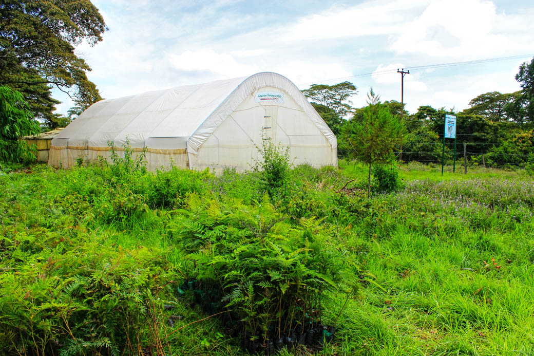 Save Mount Kenya _green house