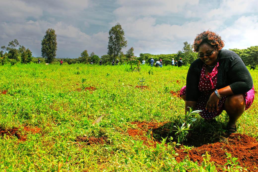 Save Mount Kenya _planting