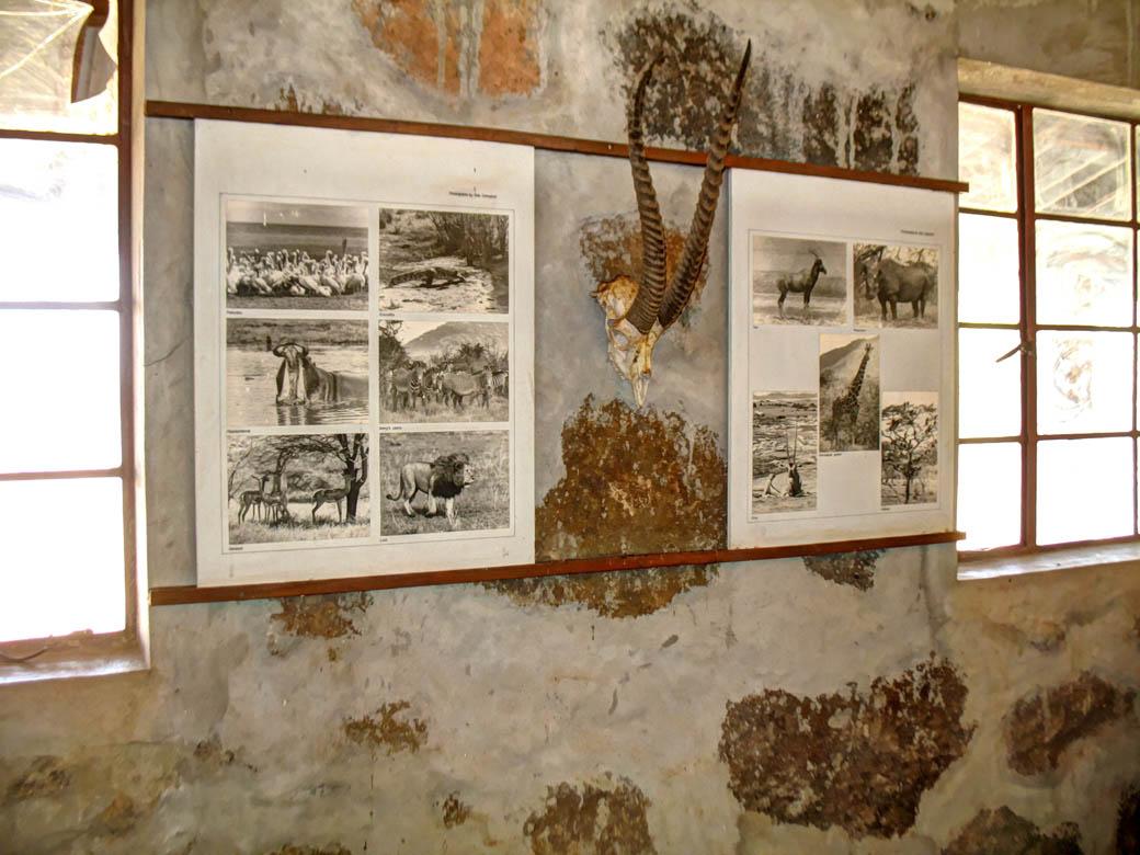 Koobi Fora Museum_Widlife in Sibiloi