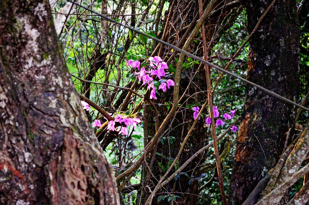 Oloolua Nature Trail_Flowers