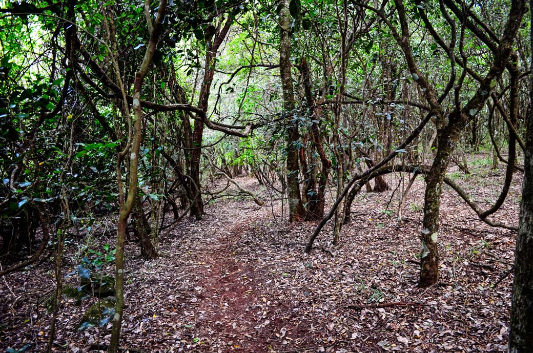 Oloolua Nature Trail_forest floor