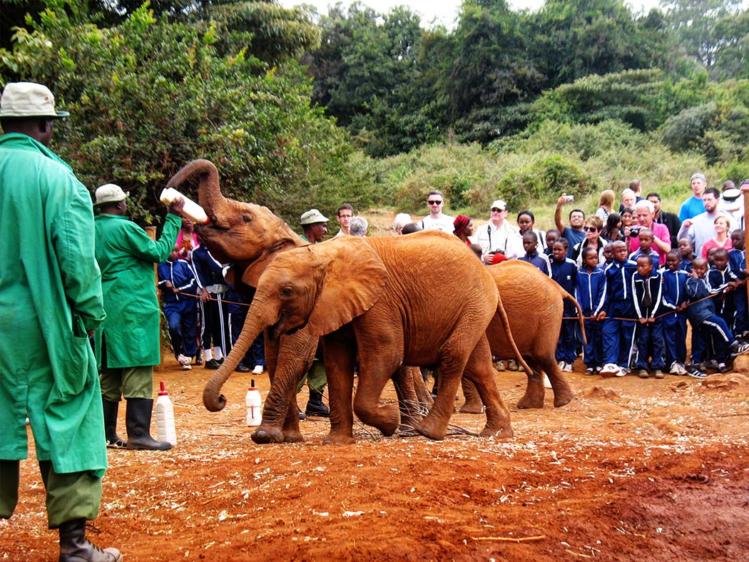 3 unmissable experiences Nairobi_David Sheldrick2