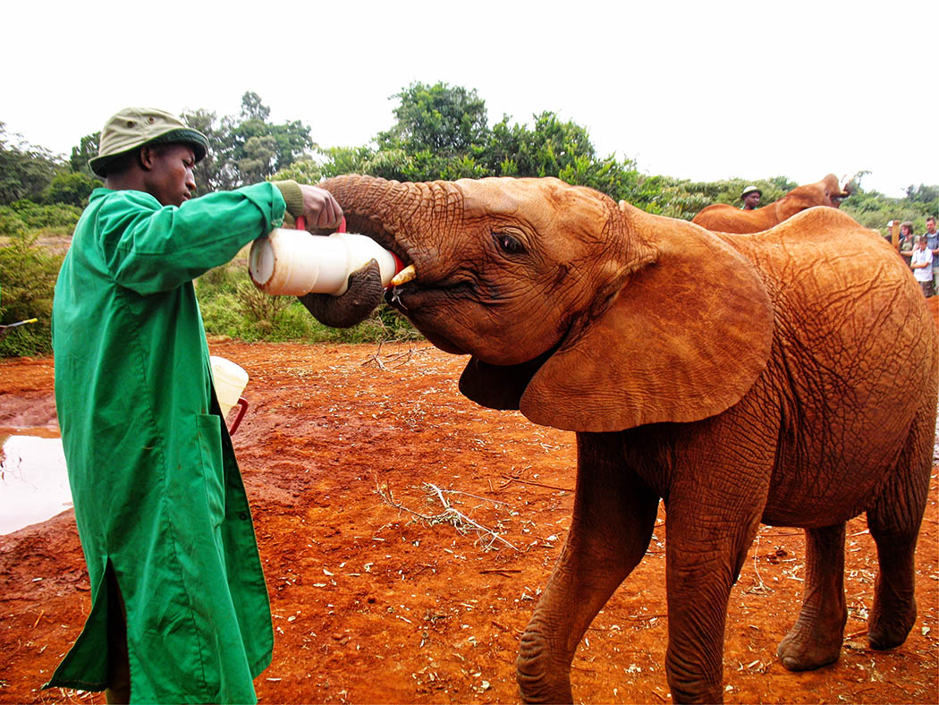 3 unmissable experiences Nairobi_David Sheldrick3