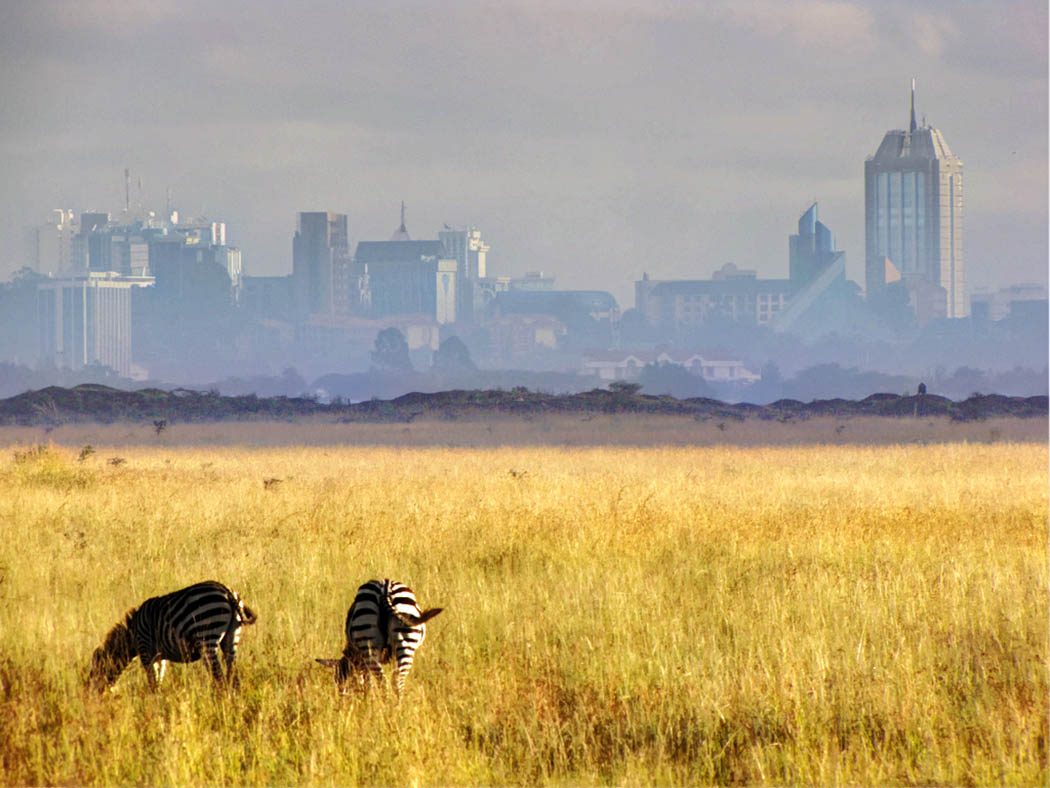 3 unmissable experiences Nairobi_Nairobi national park