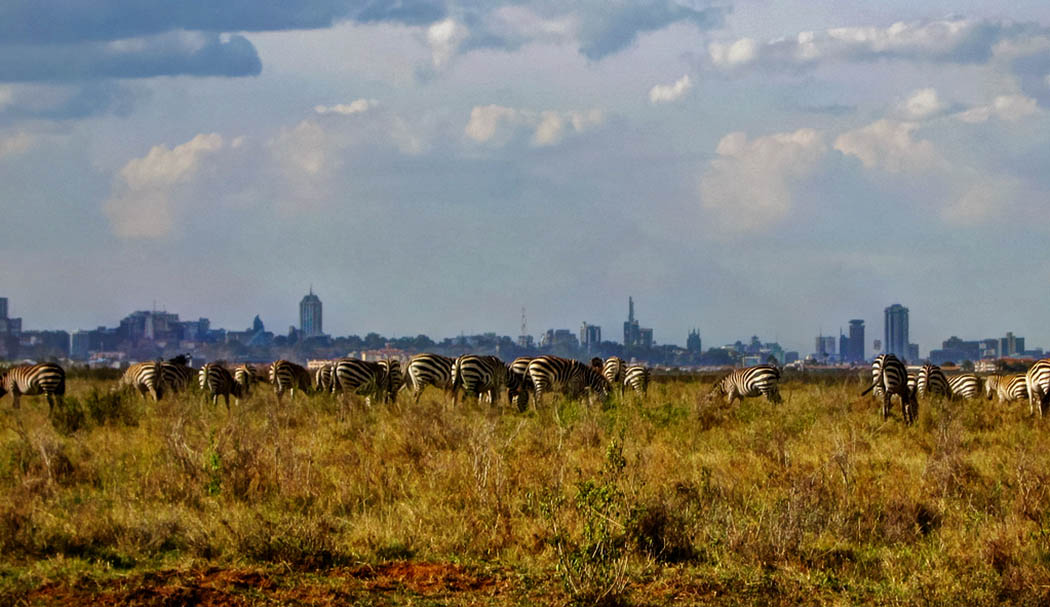 3 unmissable experiences Nairobi_Nairobi national park5