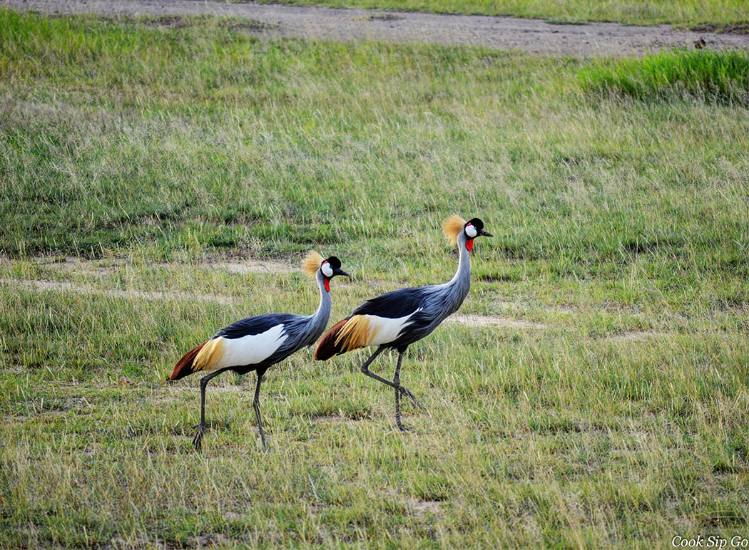 Birds of Amboseli National Park_Grey Crowned Crane Two