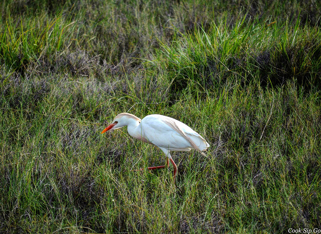 Birds of Amboseli National Park_White Egret