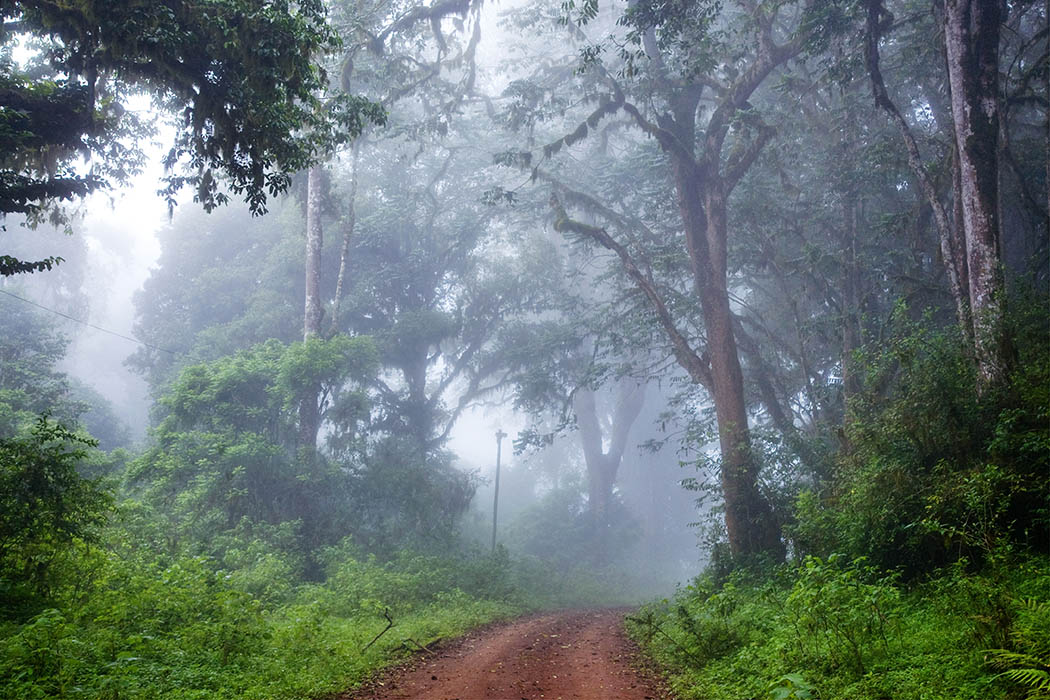 ForestMarsabit N.P.Kenya