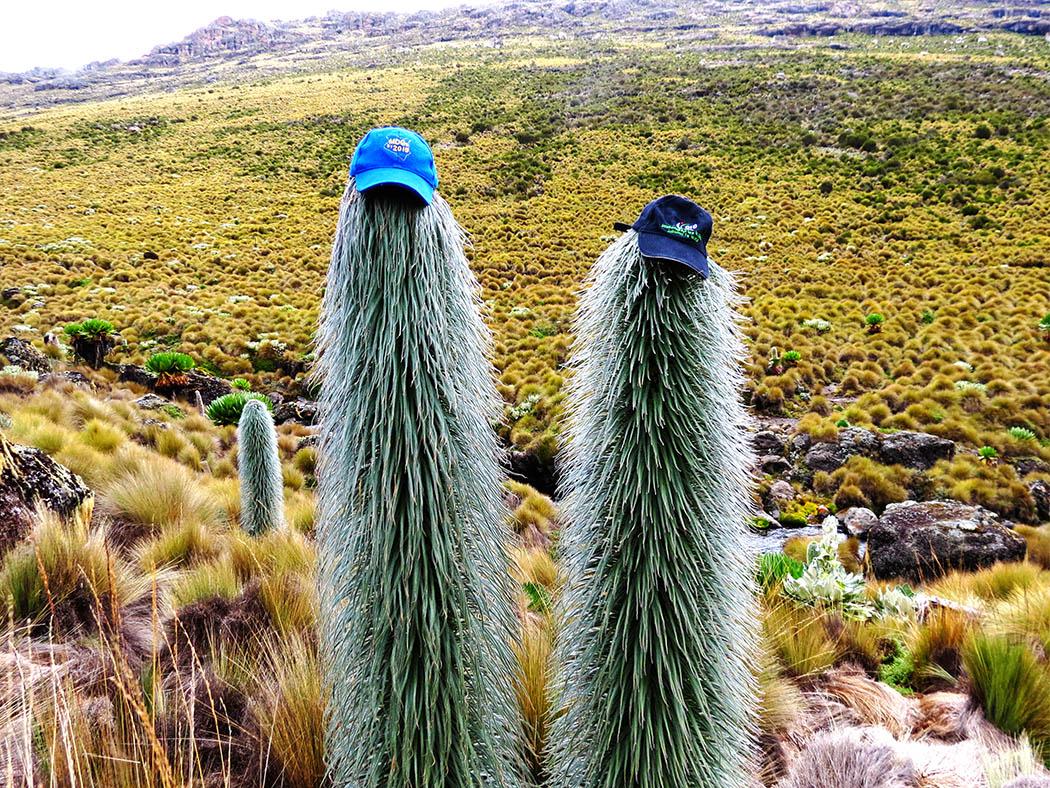 Mount Kenya_Flora