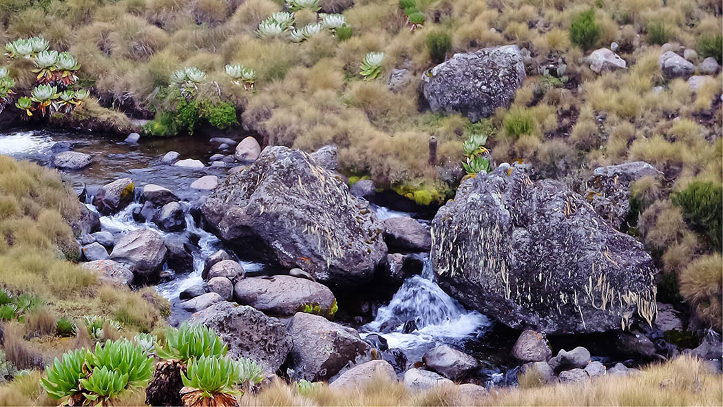 Mount Kenya_stream 6